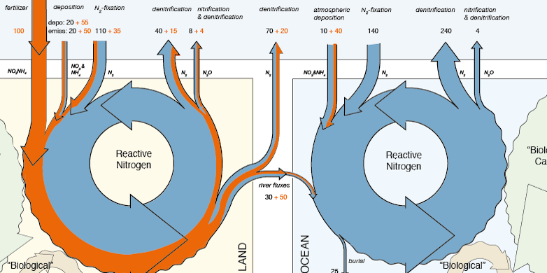 Nitrogen cycle on land and in the ocean